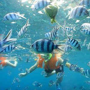 snorkeling_crop